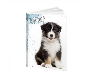agendas papagrdcchien22 0