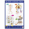posters pedagogiques pappostanglais 0 768x768