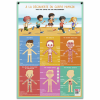 posters pedagogiques pappostcorps 0 768x768