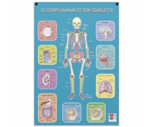 posters pedagogiques pappostsquelette 0 768x768