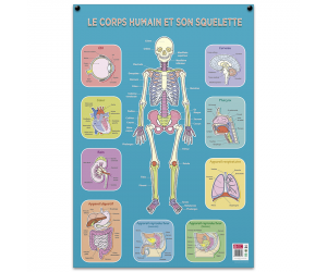 posters pedagogiques pappostsquelette 0